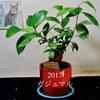 ときどきミニ観葉植物?
