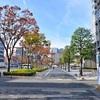 御池通の街路樹の紅葉2019、見頃や開花状況。