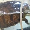 ◆ヒマを持て余す野次亀