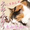 我が家の猫が一生懸命に、ふみふみ〜もみもみ〜【三女あんず】