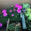 お花の苗が新しく仲間入り