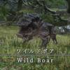 【FF14】 モンスター図鑑 No.046「ワイルドボア(Wild Boar)」