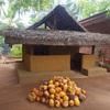 キングココナッツでオイルを作る