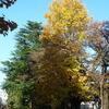 霜月~立冬~黄葉を楽しめる所