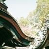 vitomatic IIIb・仏光寺の桜