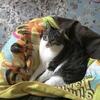 猫まとめ 2月22日は猫の日!