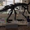 【博物館デビュー 3歳3カ月】大迫力の恐竜の全身骨格!【岐阜県】