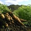 出店者情報 自然農園 空土ファーム(茂木町 野菜)