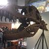 福岡市科学館の恐竜展に行ったら恐竜がいた