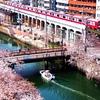 京急 大岡川の桜 2021年版