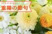 9月9日は重陽の節句❁菊の季節は、大人の方こそ開運祈願!