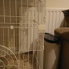 【ロンドン貧乏生活】猫が骨を折りました ② 手術費が高すぎる
