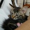 猫を飼うことになりました。それも2匹~小4の壁、「放課後」「夏休み」問題も、猫がいてくれれば一発解決?