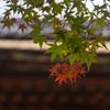 三井寺の紅葉 2
