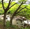 【豪渓】岡山県総社市の渓流の概要!もみじ密集、渓流沿いの緩やかな坂、癒され効果大!