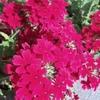 【塩竈】『シェ・ヌー』の花壇