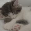 家猫ちゃん達の睡眠の秘密