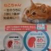 ネコちゃん健康診断キャンペーン