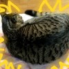 487 ウチの猫10