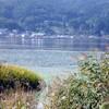 アサザ in 諏訪湖