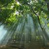 《浄化作用》カオハガン島の奇跡の木、ニーム