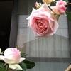 今春のBest of バラ