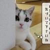 猫の病気 ~猫伝染性腹膜炎(FIP)~