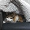 O次郎 ソファともぐり猫
