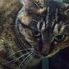 【ペット】我が家の猫...太る【ダイエット】