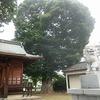 柳原神社の保存木