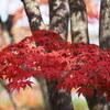 E-M1 昭和記念公園(1)日本庭園の紅葉
