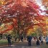 そろそろ紅葉も終わりかな、香雪園…