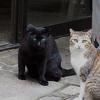 猫の集会「美味しい秋が来ましたよ。」