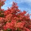 紅葉と田園風景の紀見峠から天美へ