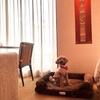 銀座の高級ホテル☆愛犬と泊まれる『ザ・ペニンシュラ東京』はワンコのおもてなしも一流!口コミ滞在記