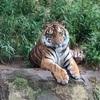 多摩動物公園は、緊急事態宣言解除にともない、6月4日に再開園!
