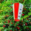 上野公園のツバキとシャガ♪