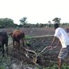 農作業が始まったin村