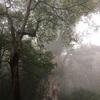 【屋久島・縄文杉の初心者失敗談】ツアーに参加しない単独登山の注意点