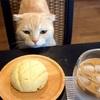 メロンパンと不機嫌な猫