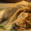 いびきを予防する方法はある?いびき防止方法やいびきを止める方法などを全部まとめ!