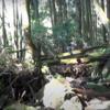 大鷹の狩りの瞬間は、苔むした川の源流で5時間45分撮影。最後にゴールデンレトリバー。