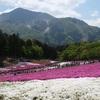 006 色鮮やかな芝桜