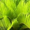 植物はなぜ緑色なのか