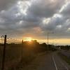 Lovely Sun Set ☀︎🌇🌳