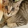 優しい性格の子猫 ナツちゃん
