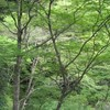 勝俣部長の健康体質作り・・・・高尾山「健康を体感する」(211)