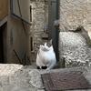 【クロアチア】5日目-3 ロヴィニを歩けばネコに遭遇