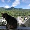 台湾の猫村「猴硐(ホウトン)」に行ってきた、期待しすぎだったかな?