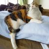 【愛猫日記】毎日アンヌさん#248